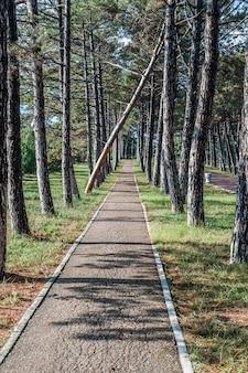 夏の公園の木々の間の道。一本の木が落ちた。
