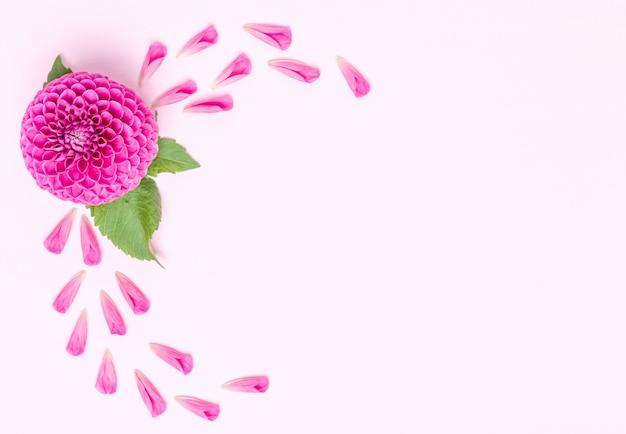 ダリアボール野蛮人と緑の葉を持つ花びら