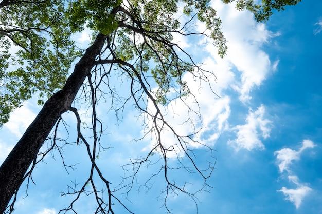 緑の木と夏の太陽の光と青い空。