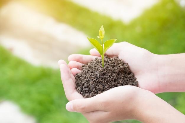 自然の背景と日差しの上に土壌に苗を植えるティーンの手