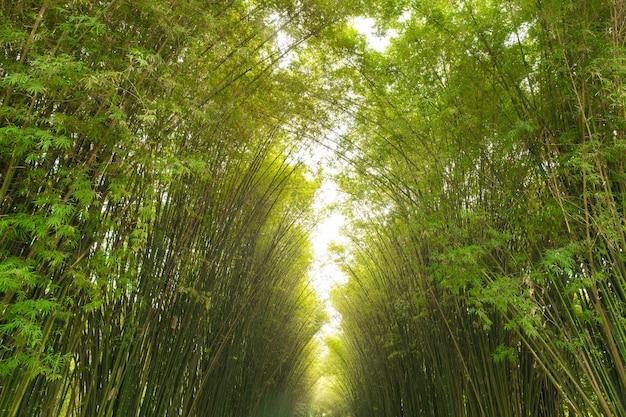 Бамбуковое туннельное лесовосстановление для устойчивого развития