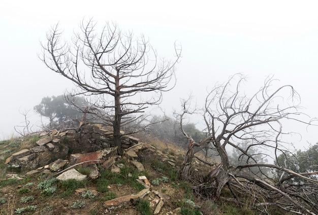 霧の中で枯れ木。怖い神秘的な風景