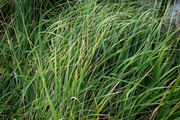 自然の背景草テクスチャカラー紫外線