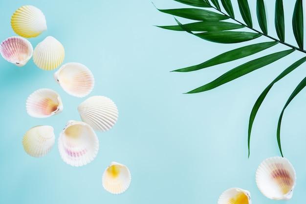 夏のクリエイティブコンセプト。ヤシの葉と貝殻で最小限のスタイル