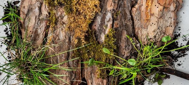 樹皮の木、コケおよび草