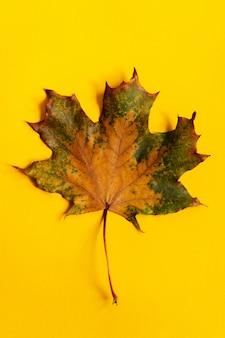 Цветной кленовый лист крупным планом