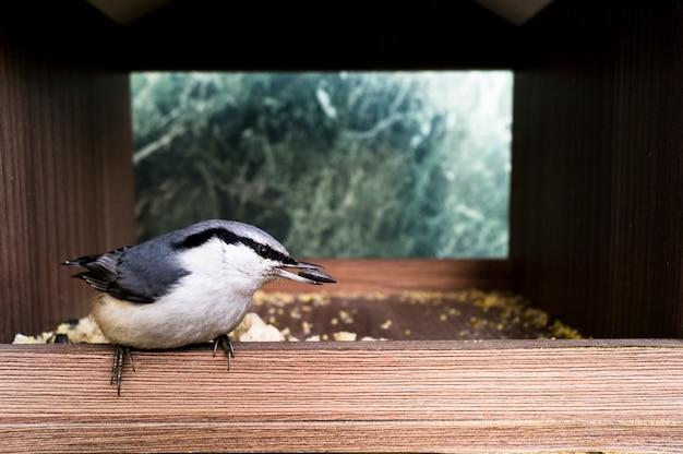 小さな鳥は種を食べる