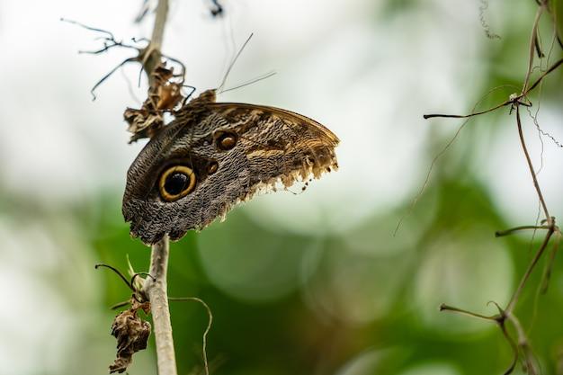 熱帯のカラフルな蝶