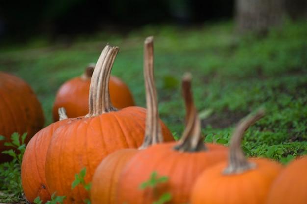 秋の伝統的な休日のハロウィーンのコンセプト