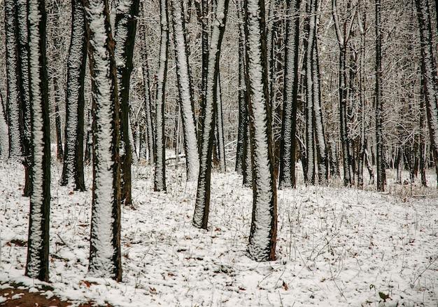 Рождественская сцена снега