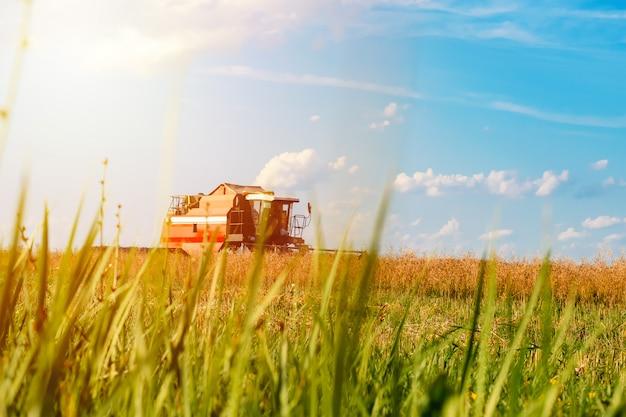 晴れた日に赤のコンバイン収穫ライ麦フィールド