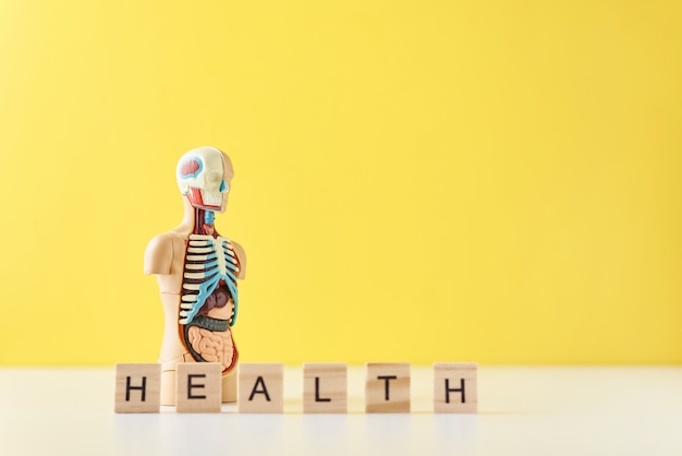 Манекен анатомии человека с внутренними органами и слово здоровье на желтом фоне. концепция медицинского здоровья