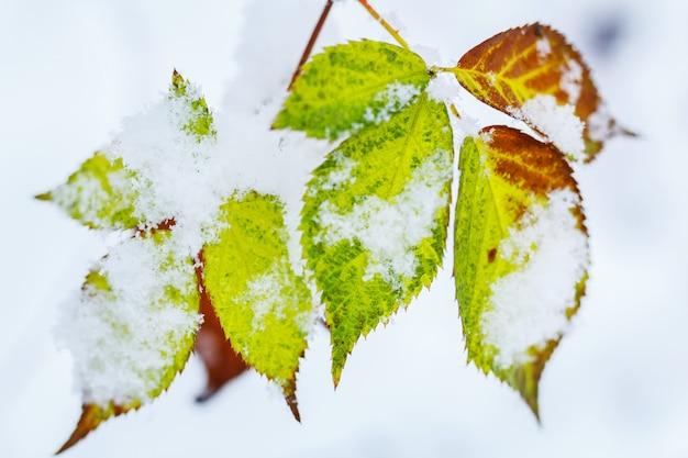 植物は冬に雪が降る