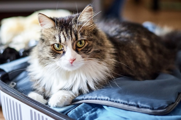 自宅、クローズアップで若いかわいい国内猫