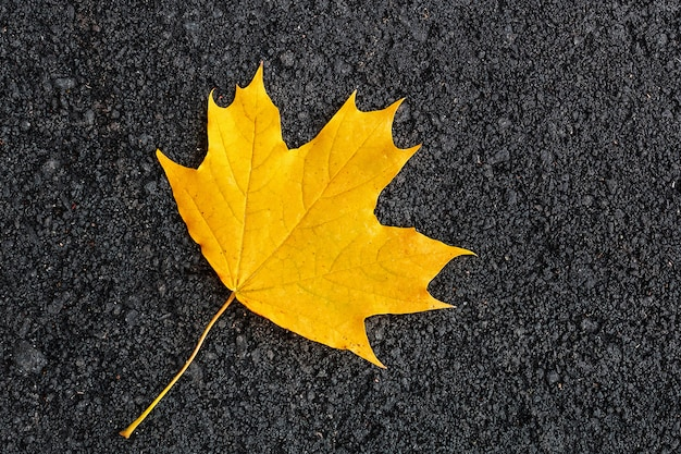Кленовый лист на темном фоне
