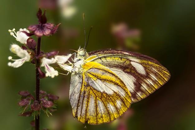 クローズアップ菜園の美しい蝶