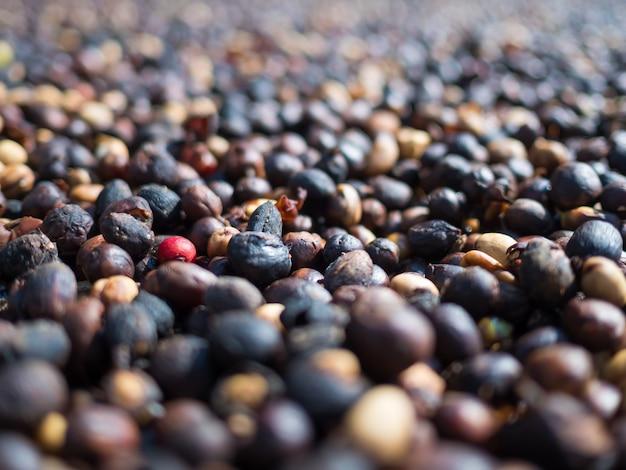 Группа сушеных кофейных ягод крупным планом