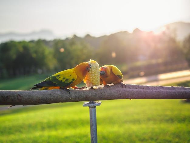 Попугай - милый экзотический питомец