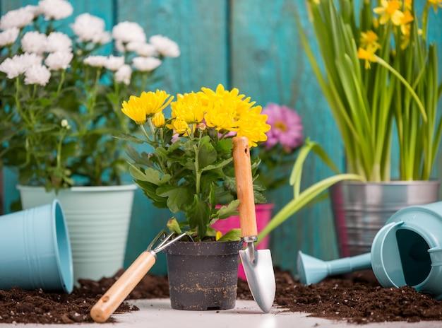木製のフェンスの近くの鍋でカラフルな菊の写真