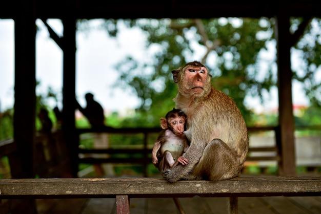 驚いてカメラを見つめながら赤ちゃん猿は牛乳を吸っています。