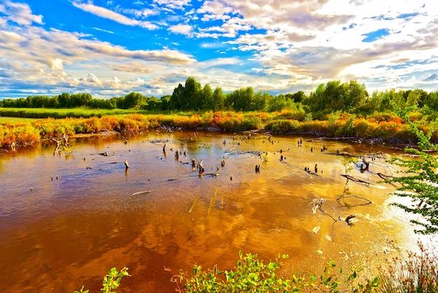 乾いた木は、青い空の下の湿地帯と夕方の白い雲を反映しています。