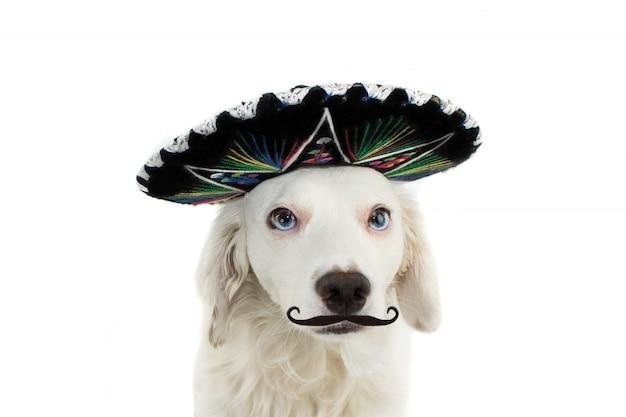 メキシコのマリアッチ犬は帽子と口ひげを生やしています。