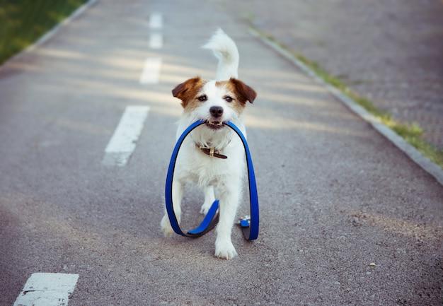 リーシュドッグパーク。幸せな朝の子犬散歩コンセプト