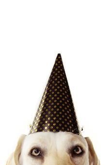 新年、誕生日やカーニバルを祝う黄金の水玉帽子をかぶっているクローズアップのお祝い犬の皮