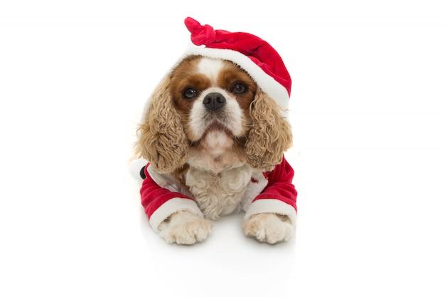クリスマスの祝日を祝うサンタクロースの衣装と犬