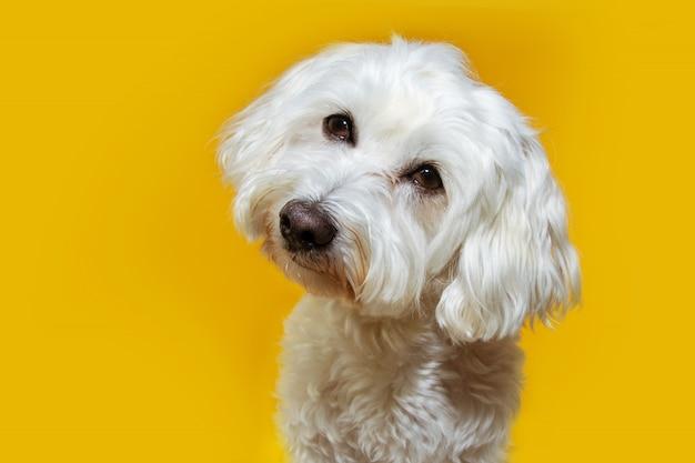 頭を傾けるかわいい子犬犬。孤立した