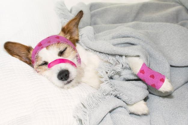 愛らしい病気の犬の睡眠またはベッドでの休息