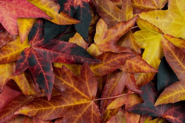 秋の背景、カラフルな落葉高角度のビュー。