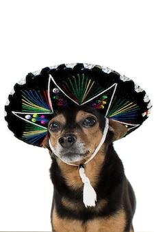 カーニバルの伝統的な帽子をかぶっているメキシコのマリアッチ犬