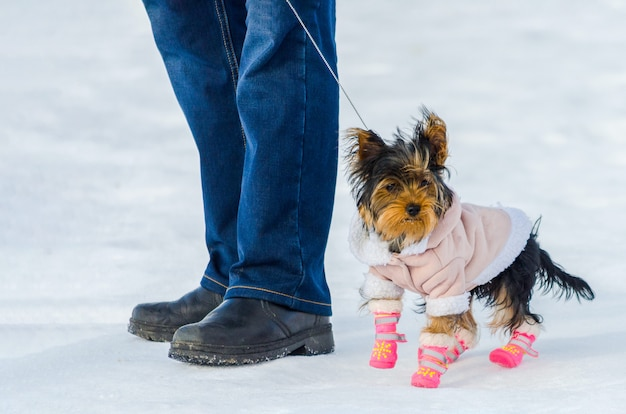 ヨークシャーテリアの小さな犬と雪の冬のバックグラウンドでの所有者