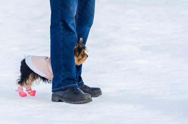 ヨークシャーテリアの小さな犬とその所有者