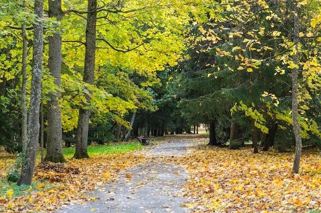 都市公園の美しい秋。カラフルなカエデの木とモミ、空のベンチ。秋の美しい自然の風景。ベラルーシの秋の公園