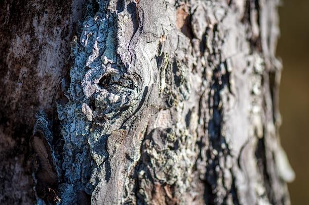 木の樹皮。松の粗く深い溝のある灰色がかった茶色の樹皮。閉じる