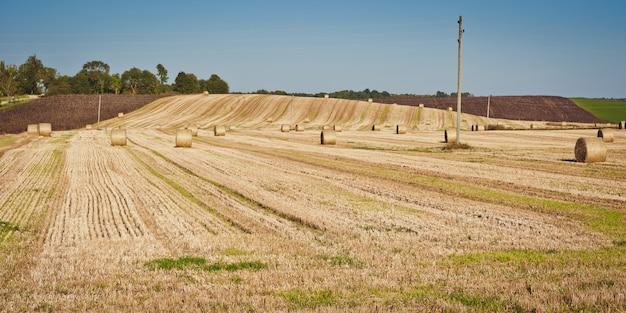 Тюки сена в сенокосе. сельскохозяйственный ландшафт.