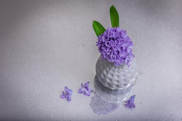 ガラステーブルの背景に水と紫のヒヤシンスの花が値下がりしました。