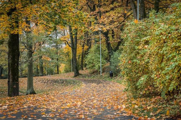 秋の森の木々や葉のパス。秋。リガ。ラトビア。