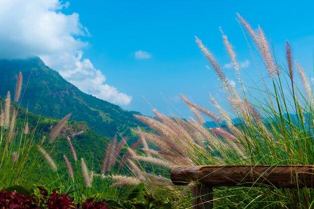 山の風に吹かれて草の花
