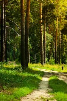 美しい背の高い木々と並んで運動のための歩行者通路