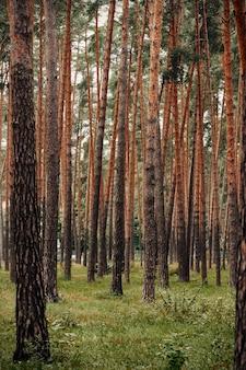 春の混交林