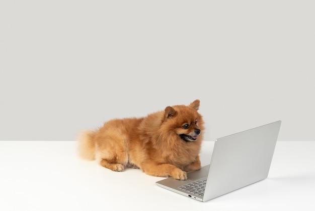 私もコンピューターを使うのが好き