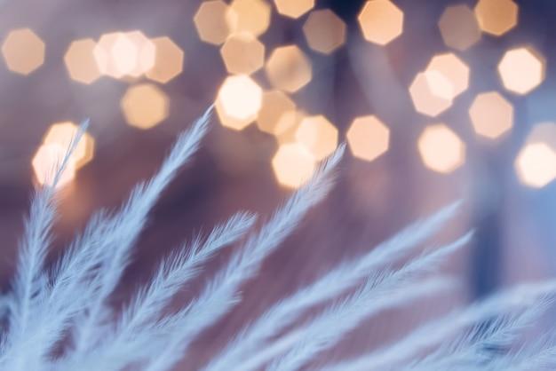 白い羽、セレクティブフォーカス、ぼやけて抽象的なライトの背景。