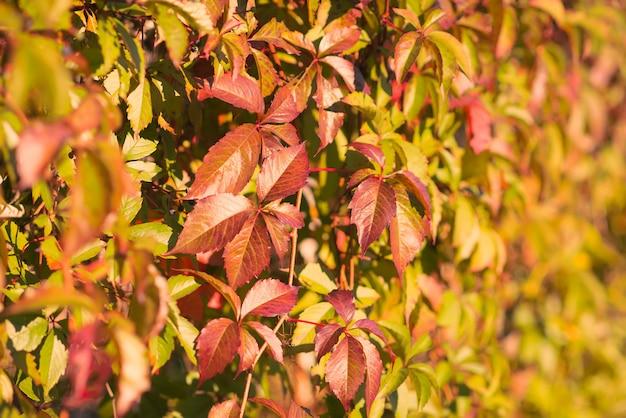 晴れた日に色鮮やかな紅葉