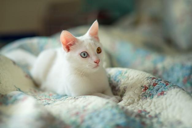 ベッドカバーに別の目を持つ白猫