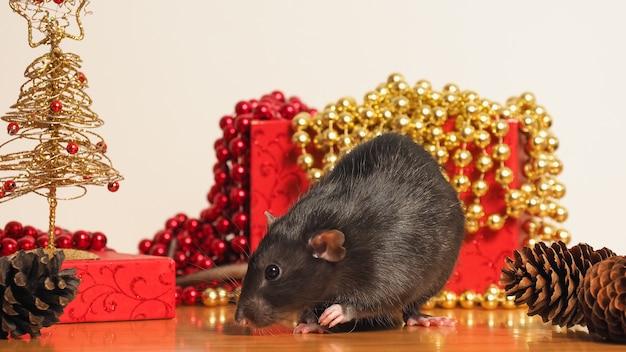Крыса дамбо перед коробкой с новогодним декором, символом года