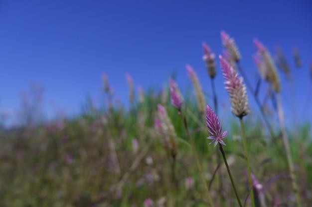 青い空を背景に自然の中でピンクの花