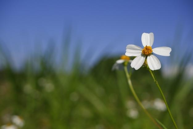 Крупным планом белый цветок в природе
